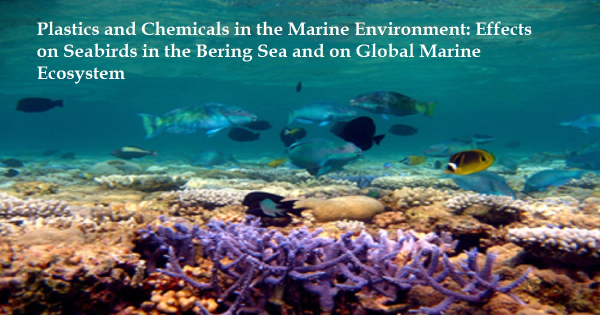 Plastics and Chemicals in the Marine Environment: Effects on Seabirds in the Bering Sea and on Global Marine Ecosystem